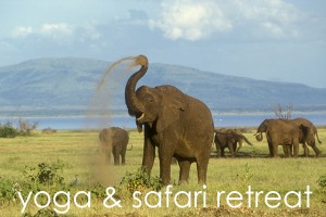 yoga safari retreat